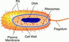 Prokaryotes vs eukaryotes essay